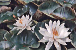 Nymphéas (Water Lilies)